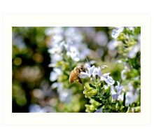 Busy Bee - Macro Photography Art Print