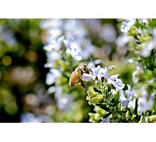 Busy Bee - Macro Photography Photographic Print