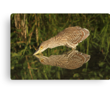 Mirror mirror on the wall who is the fairest heron of all? Canvas Print