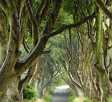 dark hedges by Rachel Slater