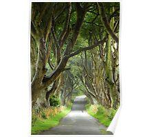 dark hedges Poster