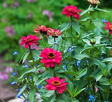 Zinnias In The Garden  by Sandra Foster