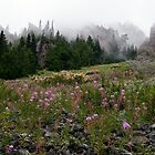 Mountains, Mist & Fireweed by Mark Heller