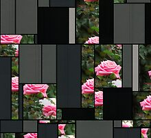 Pink Roses in Anzures 5  Art Rectangles 7 by Christopher Johnson