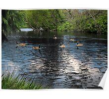 Wild Geese at Stow Lake Poster