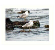 sitting seagulls Art Print