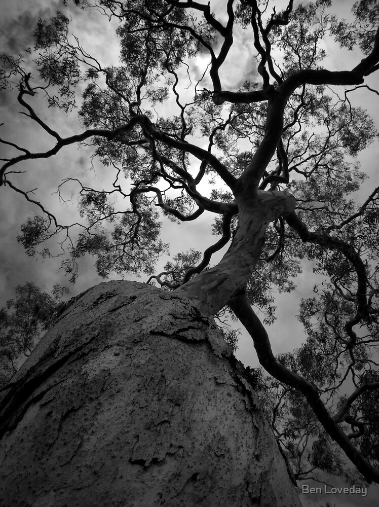 Scary Tree- Willunga Hill by Ben Loveday