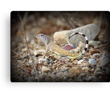 Zebra-tailed Lizard Canvas Print