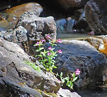 Flowers on the Rocks by funmtgirlphotos