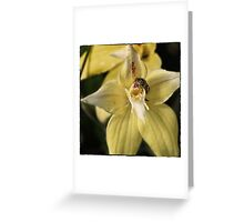 The Moment Of Pollination. Greeting Card