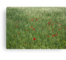 Poppy Field And Springtime Hay Meadow Canvas Print