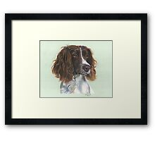 Pretty English Springer Spaniel Framed Print