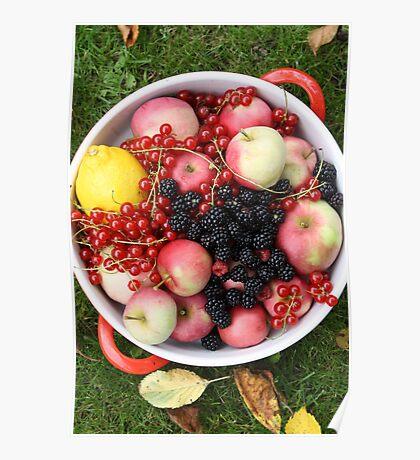 Fruit + Berries Poster