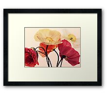 Posing Poppies Framed Print