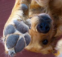 Please, No More Photographs! by Susan Bergstrom
