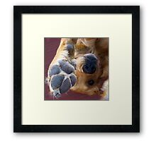 Please, No More Photographs! Framed Print
