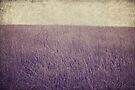 Purple field by Anne Staub
