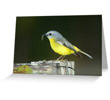 """"""" Eastern Yellow Robin  Marlo Vic. """"  Greeting Card"""