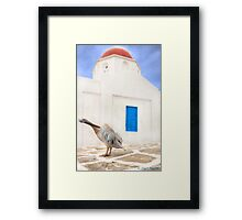 ..the local Pelican of Mykonos  {FEATURED} Framed Print