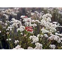 Red and White Photographic Print