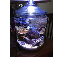 My coral reef in a cookie jar Photographic Print