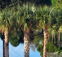 Palm Tree and reflections by Avril Harris