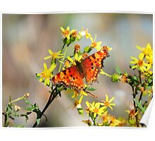 Butterfly Wild  Poster
