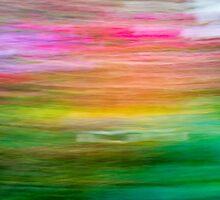Wonderment by Steve Belovarich