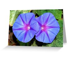 Vivid Blue, Purple and Pink Ipomoea Flowers Greeting Card