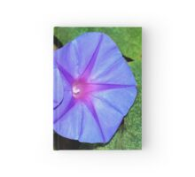 Vivid Blue, Purple and Pink Ipomoea Flowers Hardcover Journal