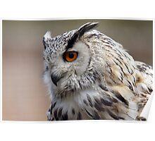 Siberian Eagle Owl Poster