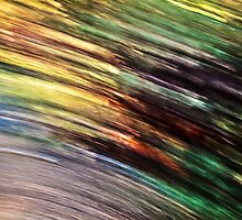 Motion In Nature by Steve Belovarich