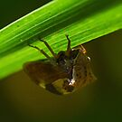 Two-Horned Treehopper by William Brennan
