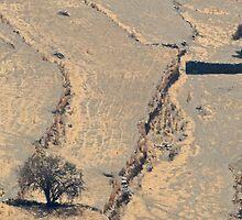 Sifnos Pastoral by Ian Mac