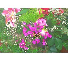 Pink flowers with butterflies Photographic Print