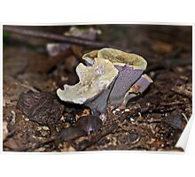 Gomphus clavatus - I Waited A Year For You - Purple Mystery Mushroom Poster