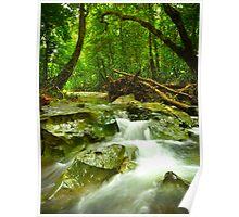 Rainforest IV Poster
