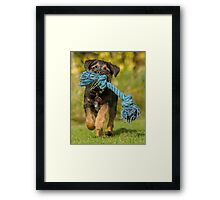 Border Terrier Puppy with Toy Framed Print