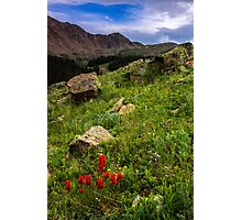 Paintbrush on Loveland Pass Photographic Print