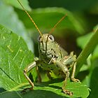 Groovy Grasshoppers! by William Brennan