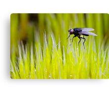 Tiny Fly Canvas Print