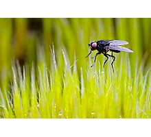 Tiny Fly Photographic Print