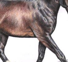 The Horse - Hannoveraner Sticker