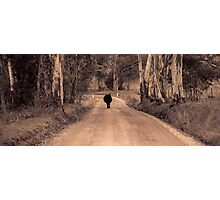 Its a cows road Photographic Print