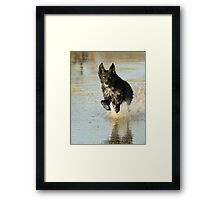 Dog Sprinting in Water Framed Print