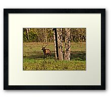Bull Elk in Ponca Framed Print