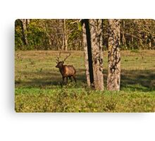 Bull Elk in Ponca Canvas Print