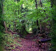 Trail to Rock Hill Cave in the Morning by TrendleEllwood