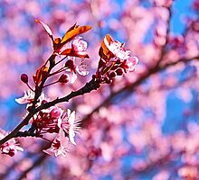Spring is the air by fantasytripp