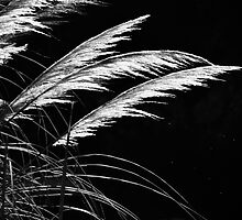 Grass Feathers by Karen E Camilleri